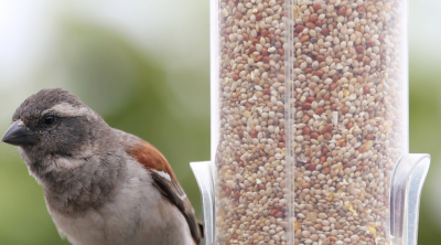 Best Bird Feeders to Buy in India - HB