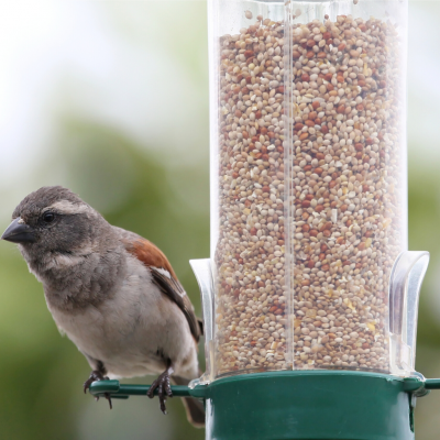 FEED YOUR FEATHERED FRIENDS WITH THESE LOVELY BIRD FEEDERS