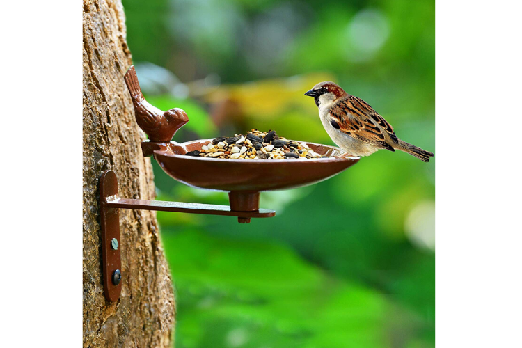 Best Bird Feeders to Buy in India in 2020 Sharpex