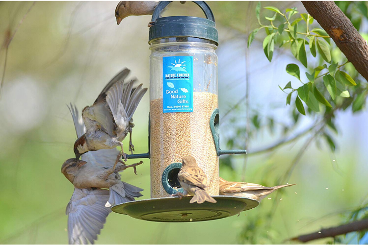 Nature Forever Bird Feeder